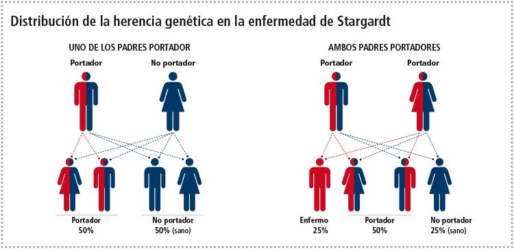 infografia-STARGARDT-x-web-28Mz-CAST-1