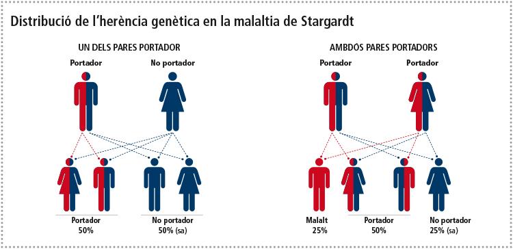 infografia-STARGARDT-x-web-28Mz-CAT-1